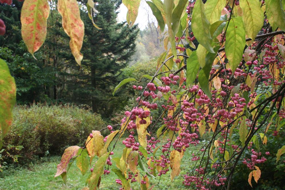 """""""...Podzim u nás, na Staré Škole v Kunčicích, vstupuje do své druhé půle. Kdyby jste tápali, která vlastně polovina podzimu je ta pravá,... přijeďte k nám ! Na skutečně odpočinkový pobyt, za poznáním přírody. Do míst, kde mnohdy po celý den nepotkáte živáčka. Snad jen sýkorky, krkavce nad korunami stromů, povykující sojky, vysokou na pastvě, ...nebo jen rudé keře plné šípků, ojíněných ranní rosou. Víme, že vás, skalních příznivců zádumčivé podzimní přírody není v dnešní době mnoho, ale právě pro Vás jsme zde. Naleznete klidné zázemí, domácí kuchyni bez hvězdiček, vůni bylinkových čajů či skořice a hřebíčku v hrnéčku svařeného vína. Poradíme, kam za každého počasí,....s sebou vezměte jen dobrou náladu a odhodlání k poznávání i vnímání okolní přírody ve své zralé podobě...""""."""